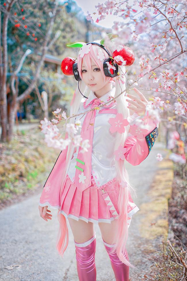 ✿桜ミク✿樱初音